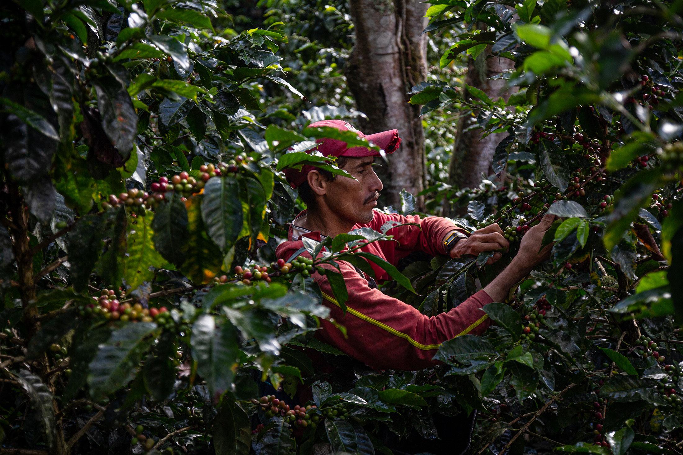 CafCaf Kaffee-Onlineshop